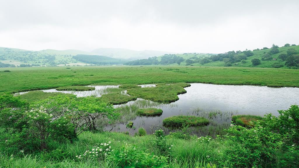 社員旅行に行ってきました。2日目:湿原~諏訪湖散策~昼食編3